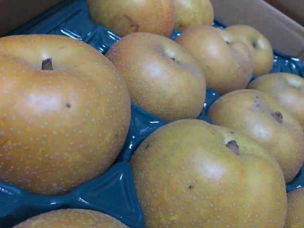 神奈川県相模原産の梨