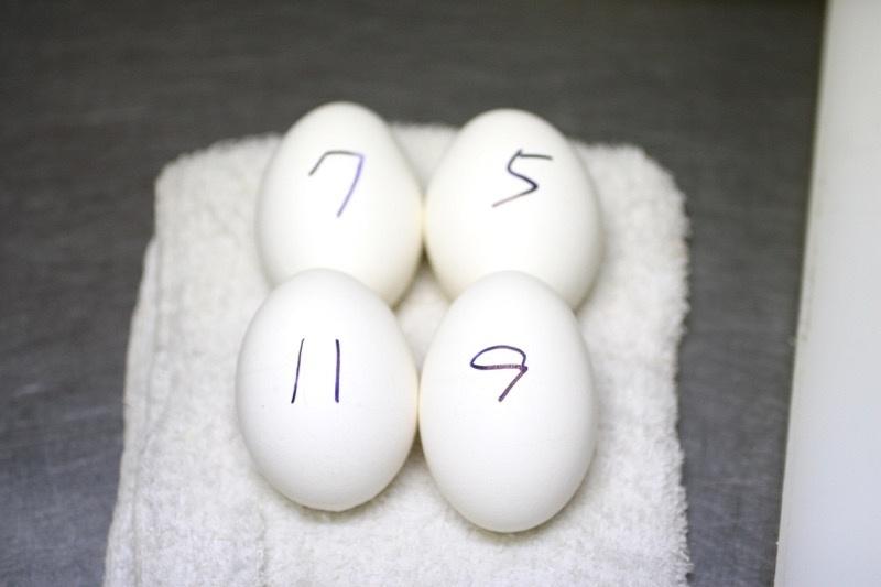 4種のゆでたまごの作り方7