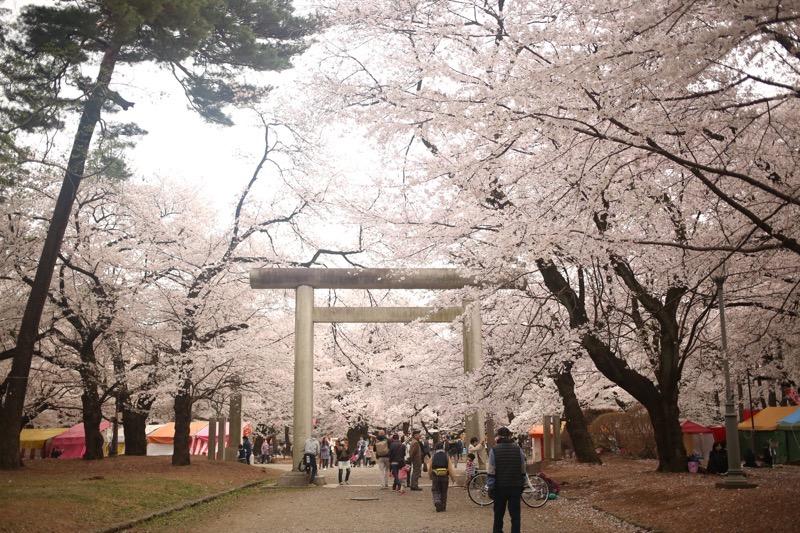 大宮公園 お花見5