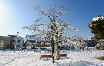 蕨 大雪16