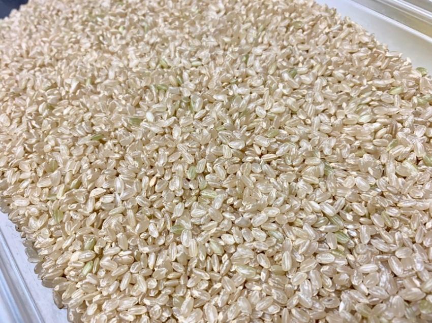 玄米の炊き方2